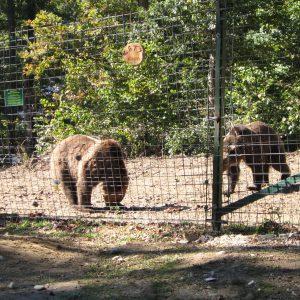 Rezervatia de ursi Zarnesti, tarcul de la intrare