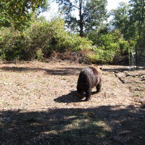 Rezervatia de ursi Zarnesti, ud dupa baie