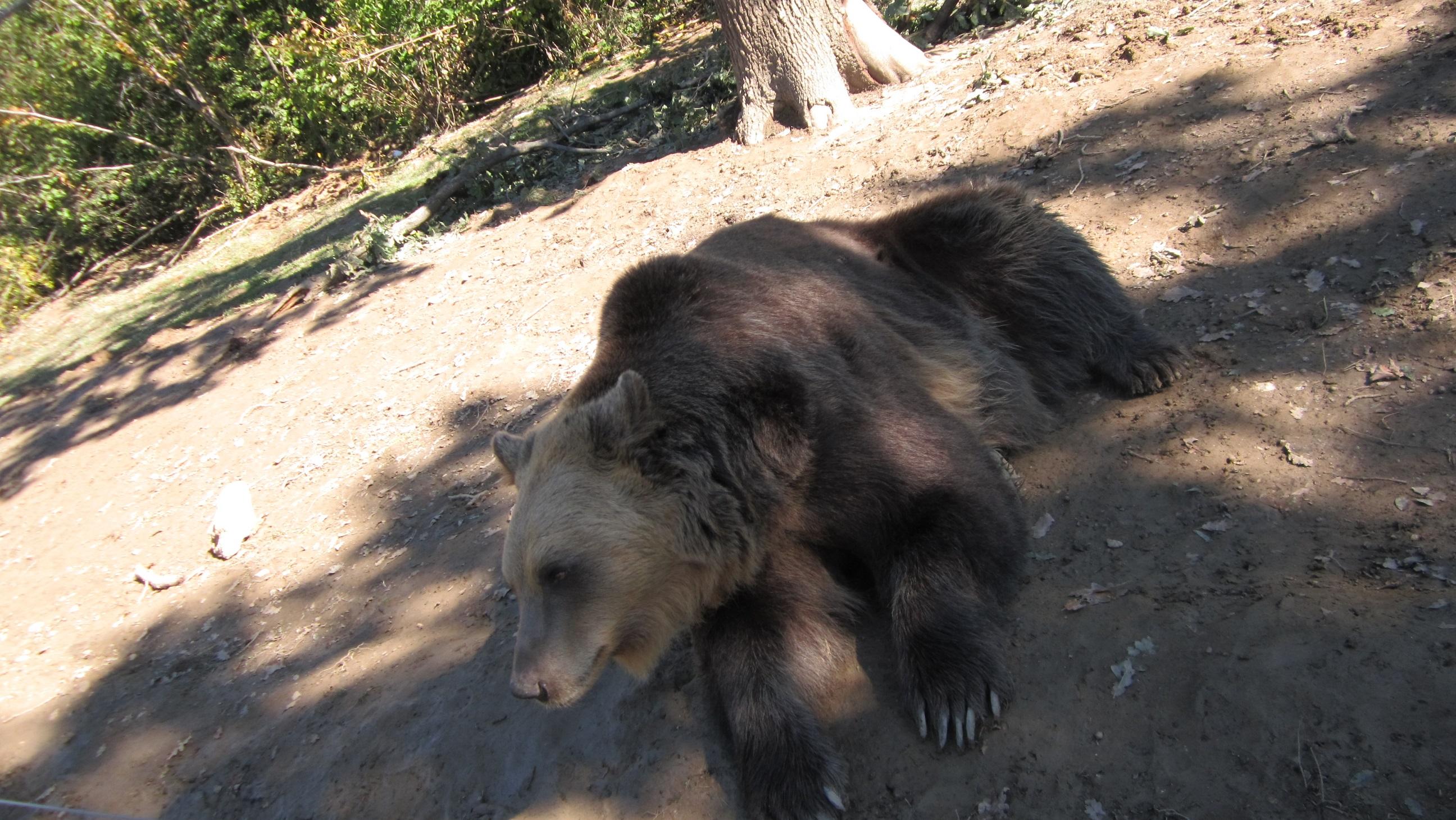 Rezervatia de ursi Zarnesti, calm, la pozat
