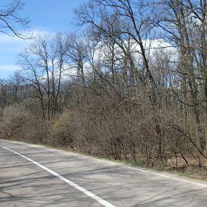 Pe la sud de Bucuresti cu cursiera, printre padurile din Comana spre Prundu