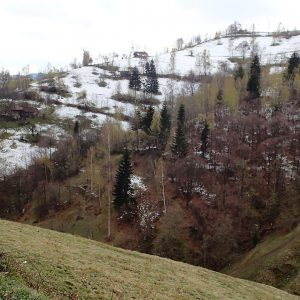 Zarnesti - Moeciu in alergare, dealuri din Moeciu