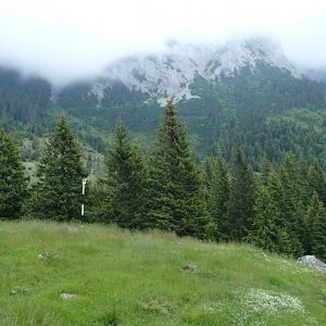 Ture de alergare prin Bucegiul vestic, spre Valea Gaura