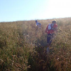 Creasta Iezer – Papusa in alergare, urcarea prin iarba spre creasta