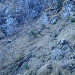 Valea Coltilor, saua din care se coboara in Valea Malinului