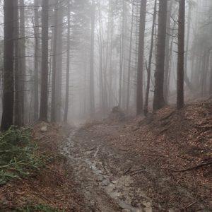 Alergare de iarna pe la Diham si Malaesti, coborarea noroioasa de la Diham