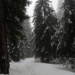 Alergare de iarna pe la Diham si Malaesti, prin padure, spre Malaesti