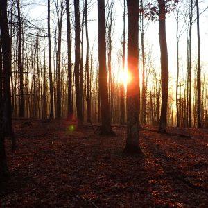 Alergare prin Câmpina, soarele