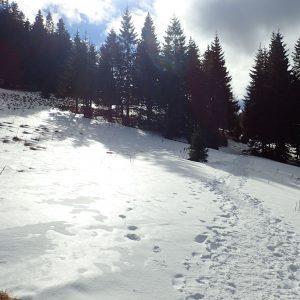 Alergare de iarnă în Piatra Mare, tot pe drumul familiar