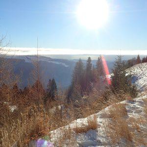 Alergare de iarnă Sinaia - Babele, pe drumul de vara spre Cota 2000