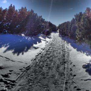 Alergare de iarnă Sinaia - Babele, culoar de jnepeni spre Piatra Arsa