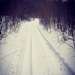 Alergare de iarnă la Comana, si iarna circula masini prin padure