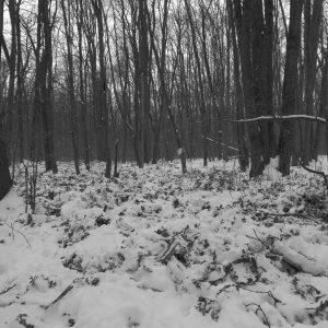 Alergare de iarnă la Comana, pamant rascolit de animale