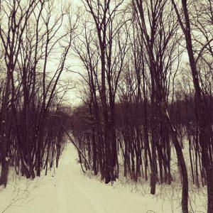Alergare de iarnă la Comana, la vale prin padure