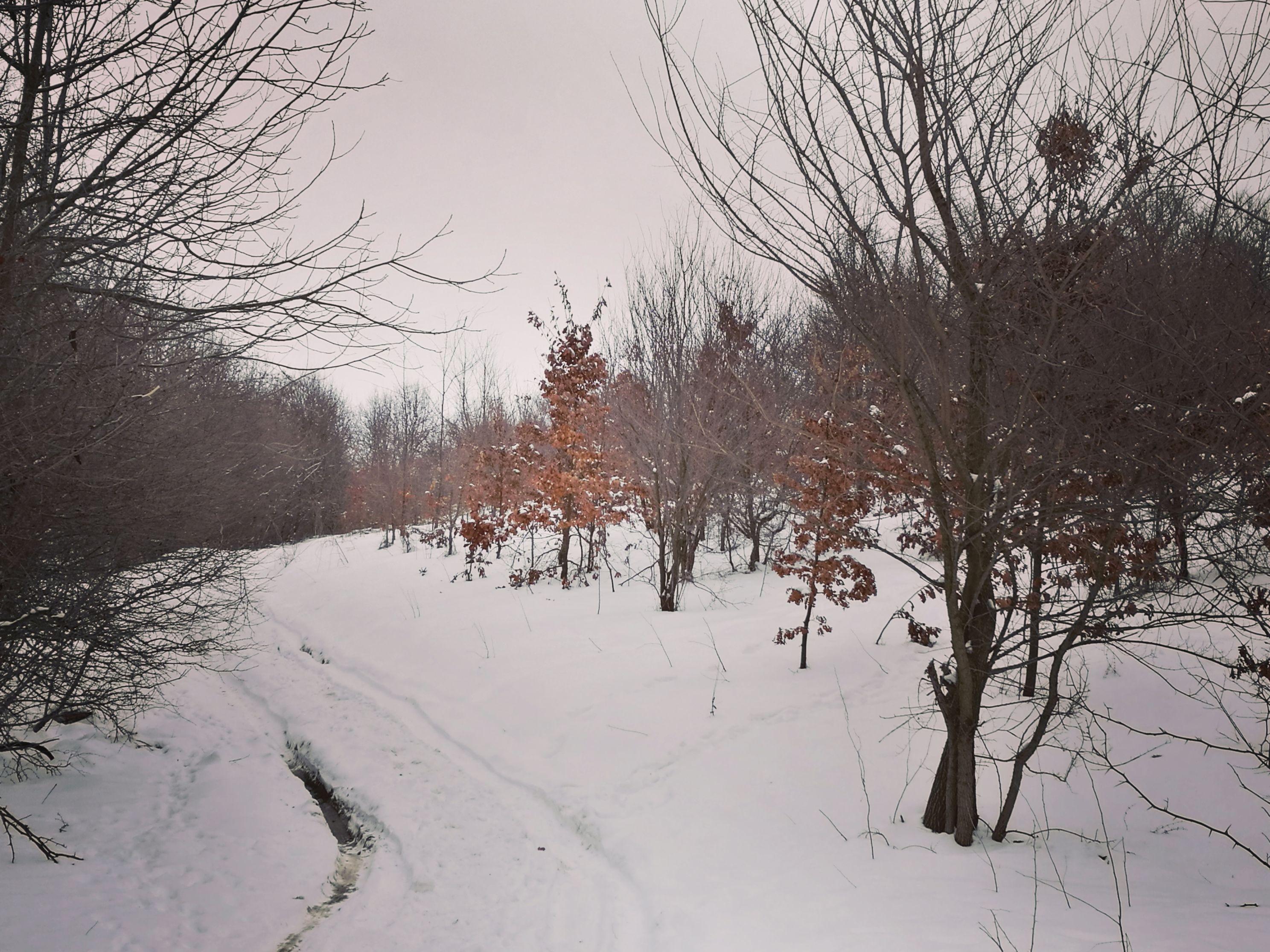 Alergare de iarnă la Comana, prin padure