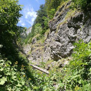 Cataratura pe Valea Comorilor, zona de vegetatie imediat dupa prima saritoare