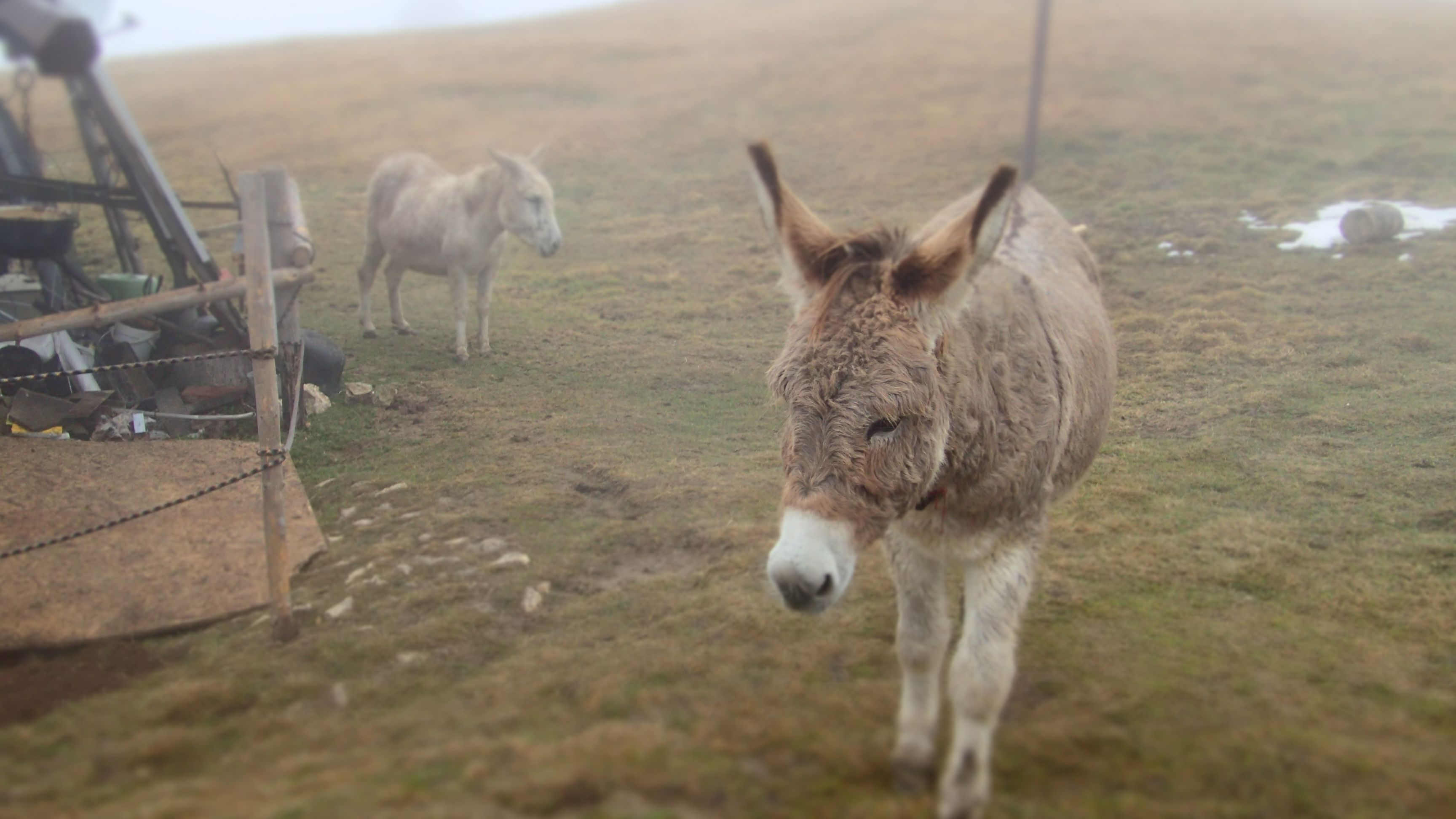 Plimbare de toamna prin Piatra Mare, magarii, prietenii cabanei