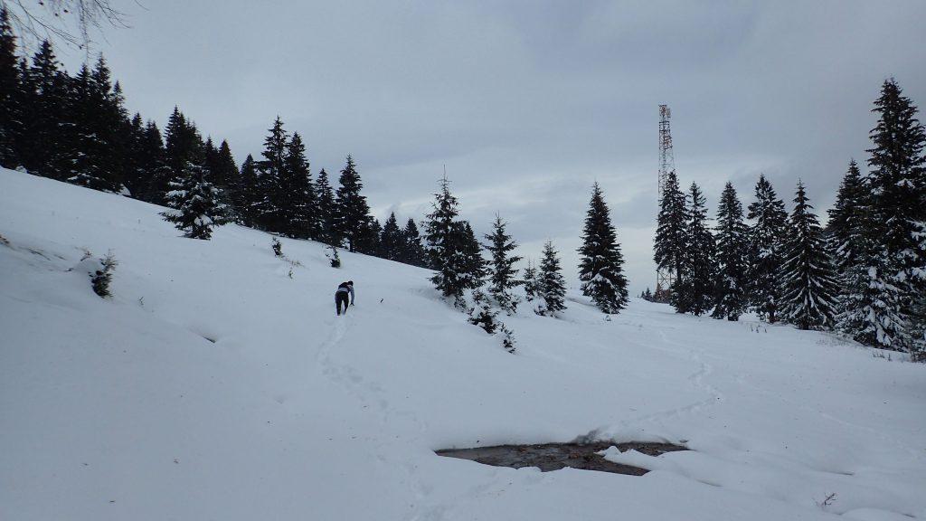 Trekking rapid de iarnă spre Mălăesti, zona de relee spre cabana Diham