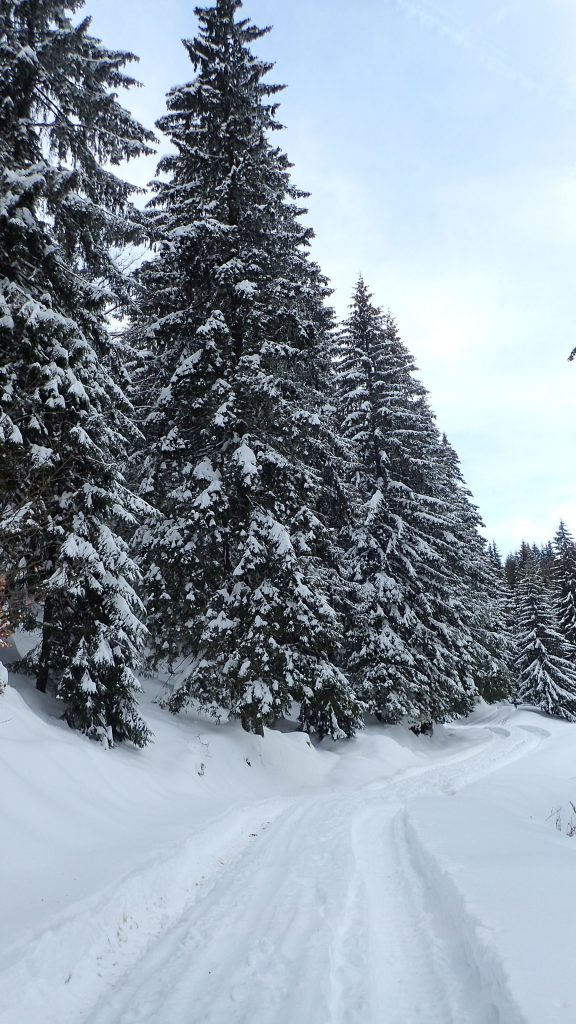 Trekking rapid de iarnă spre Mălăesti, spre cabana Diham