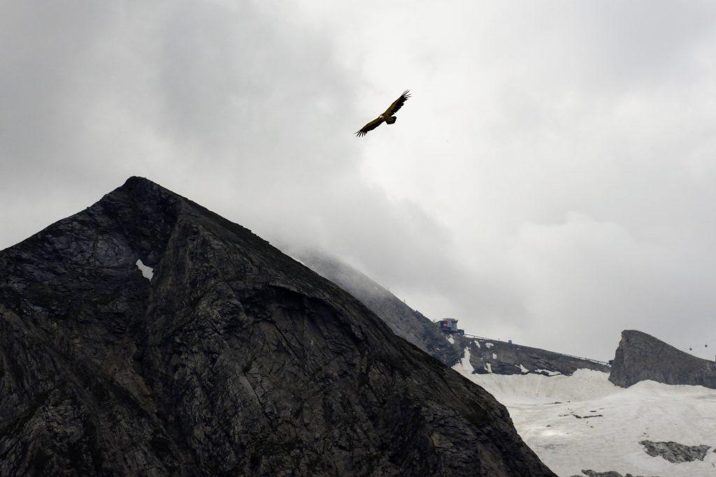 Vulturul care ne dadea tarcoale