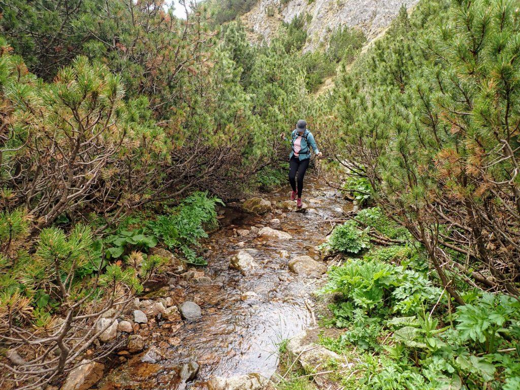 Zona de jnepeniș și cărarea de apa