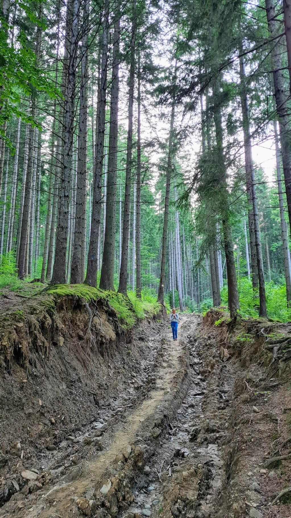 Ultimii metri pe traseul Valea Cerbului